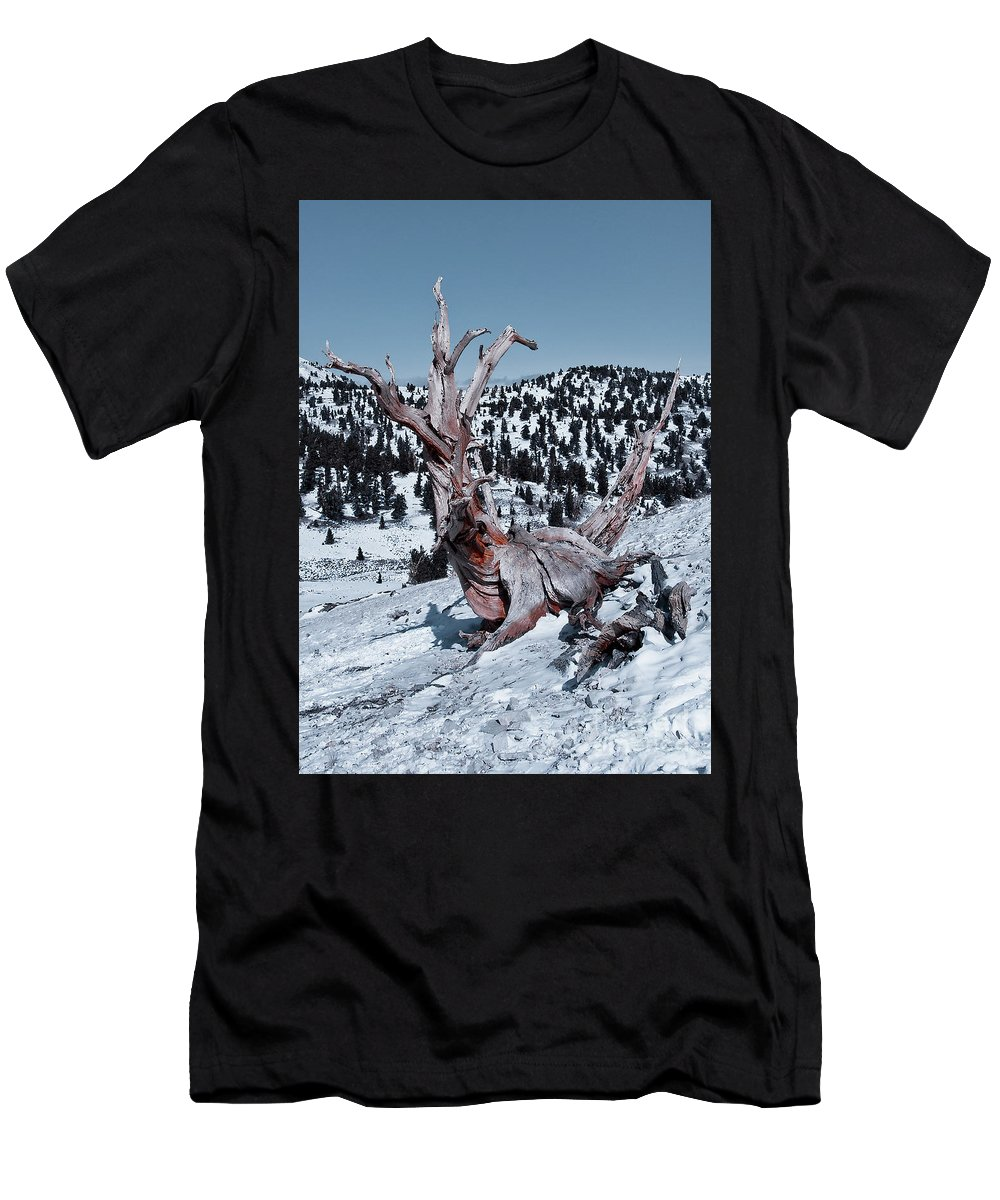 Skating Pine Men's T-Shirt (Athletic Fit) featuring the photograph Skating Pine by Mae Wertz