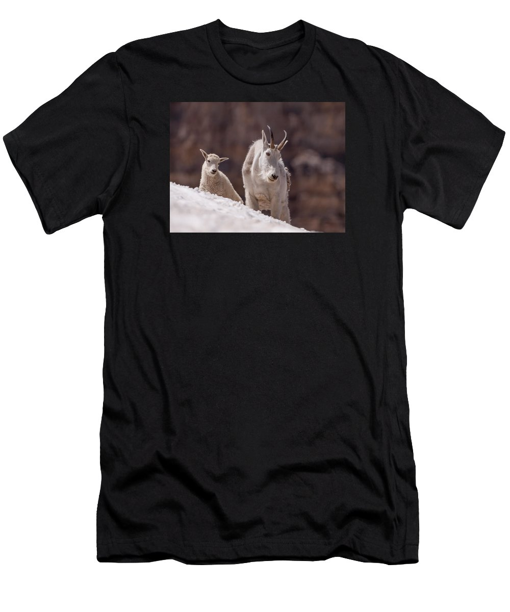 Mountain Goat Men's T-Shirt (Athletic Fit) featuring the photograph Snowfield by Kent Keller