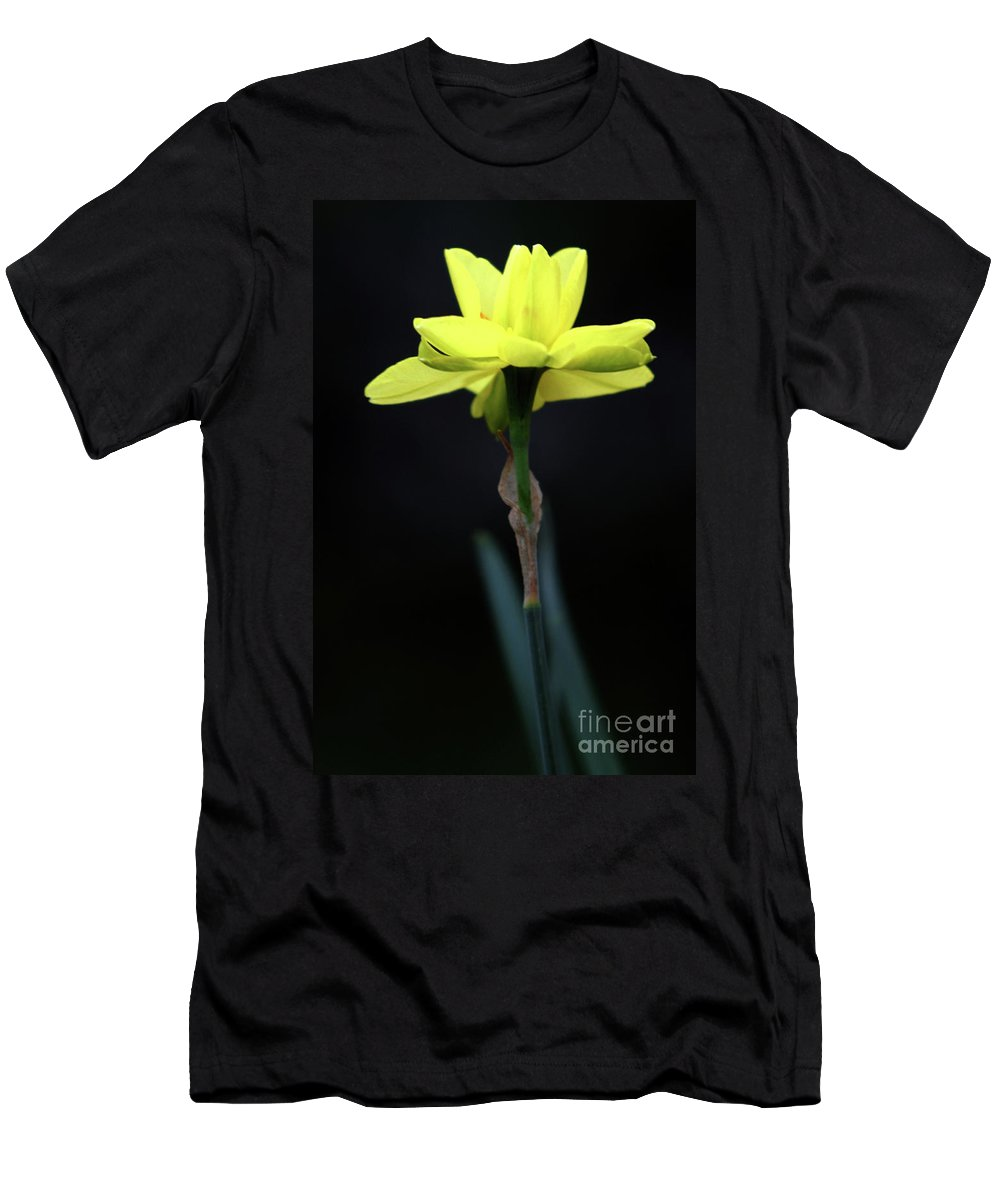Background Men's T-Shirt (Athletic Fit) featuring the photograph Solitaire Yellow Daffodil by Alan Look