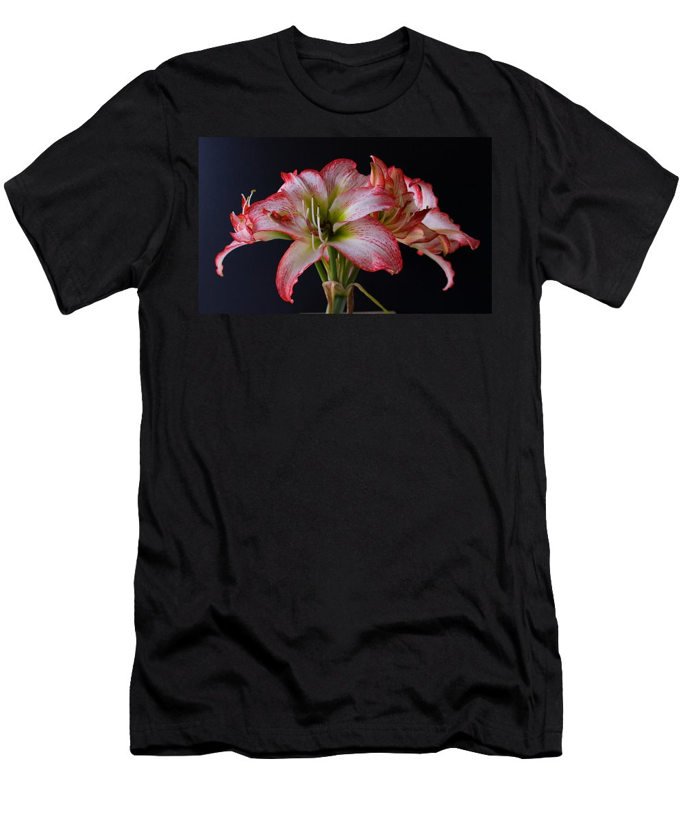 Amaryllis; Flower; Bloom; Blossom; Springtime; Spring; March; Stem. Bulb; Plant; Wildflower; Black; Men's T-Shirt (Athletic Fit) featuring the photograph Spring Amaryllis by Allan Hughes