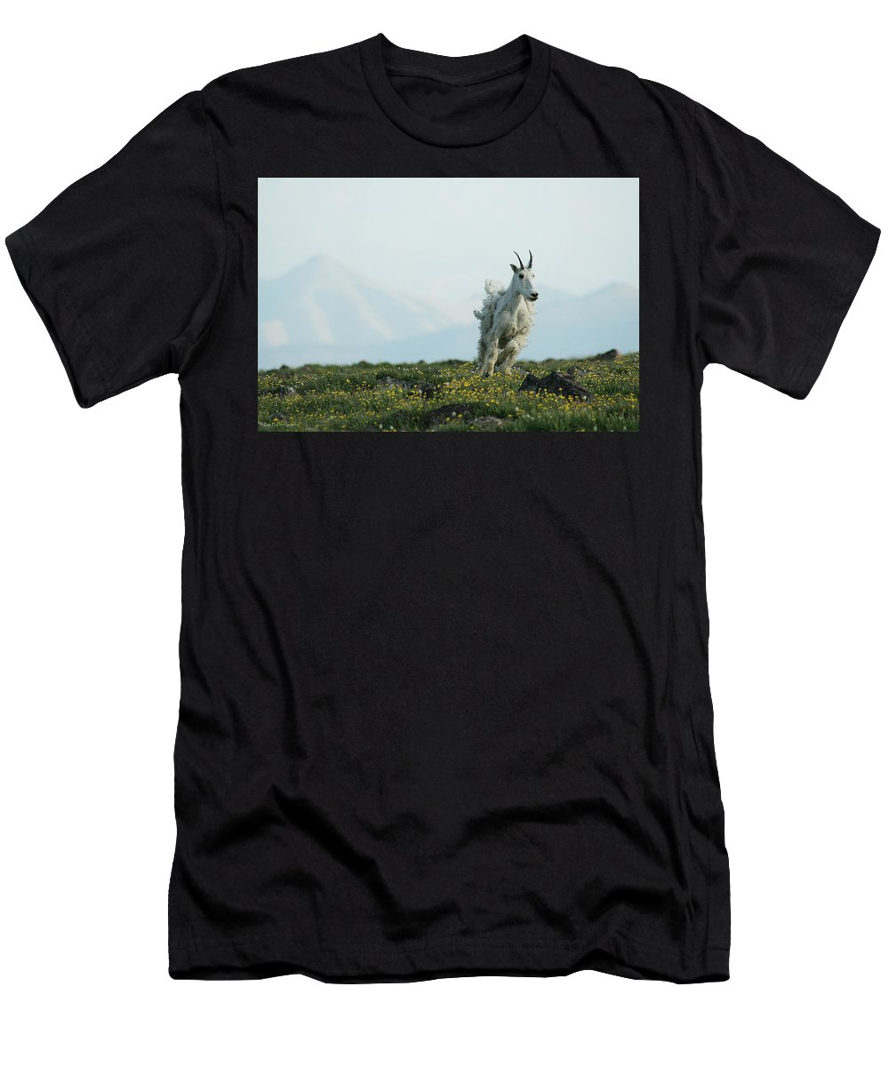 Mountain Goat Wildlife Nature West Montana Men's T-Shirt (Athletic Fit) featuring the photograph Spring Layers by Brandon and Becky Holley