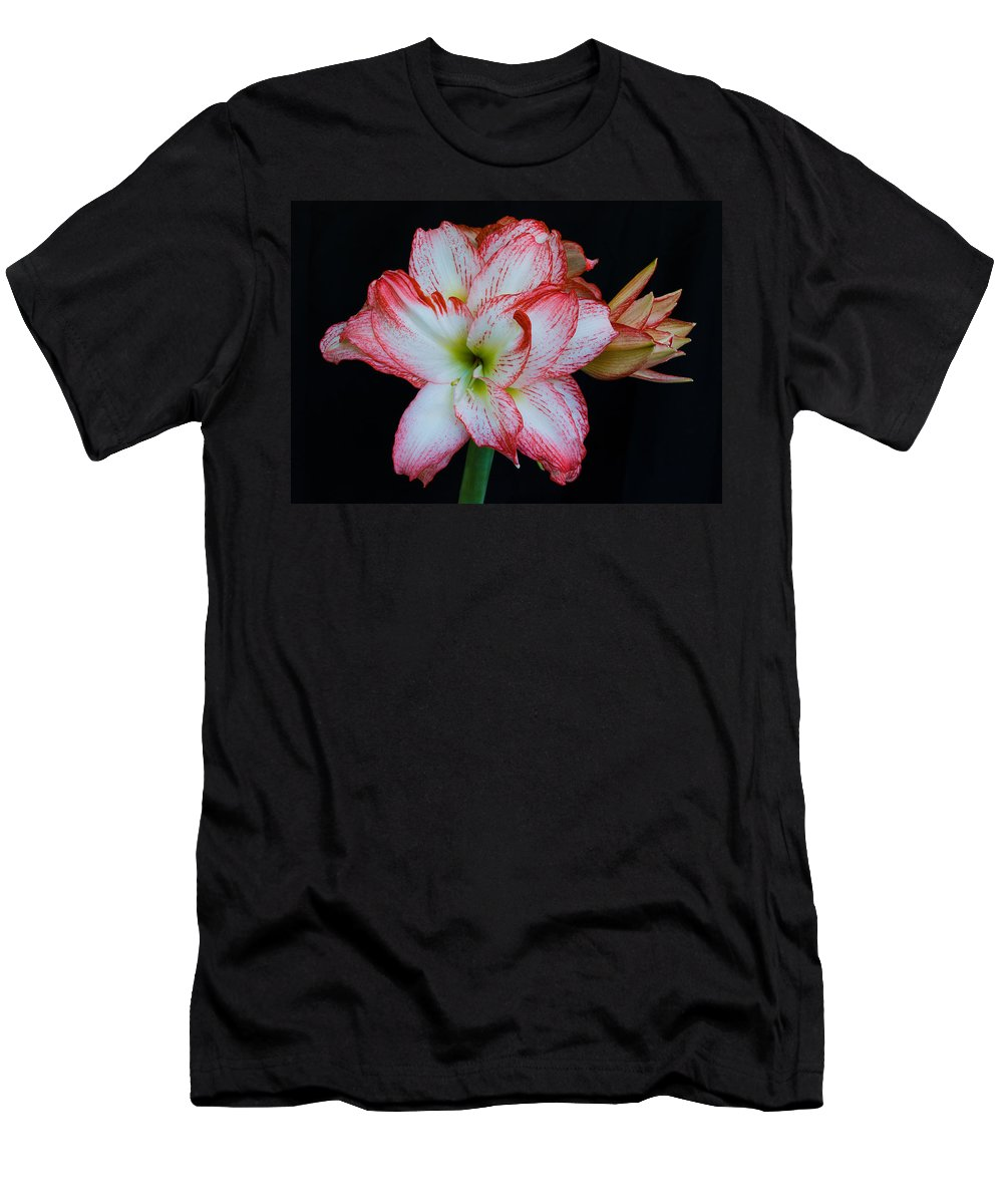 Amaryllis; Flower; Bloom; Blossom; Springtime; Spring; March; Stem. Bulb; Plant; Wildflower; Black; Men's T-Shirt (Athletic Fit) featuring the photograph Springtime Florida Amaryllis by Allan Hughes