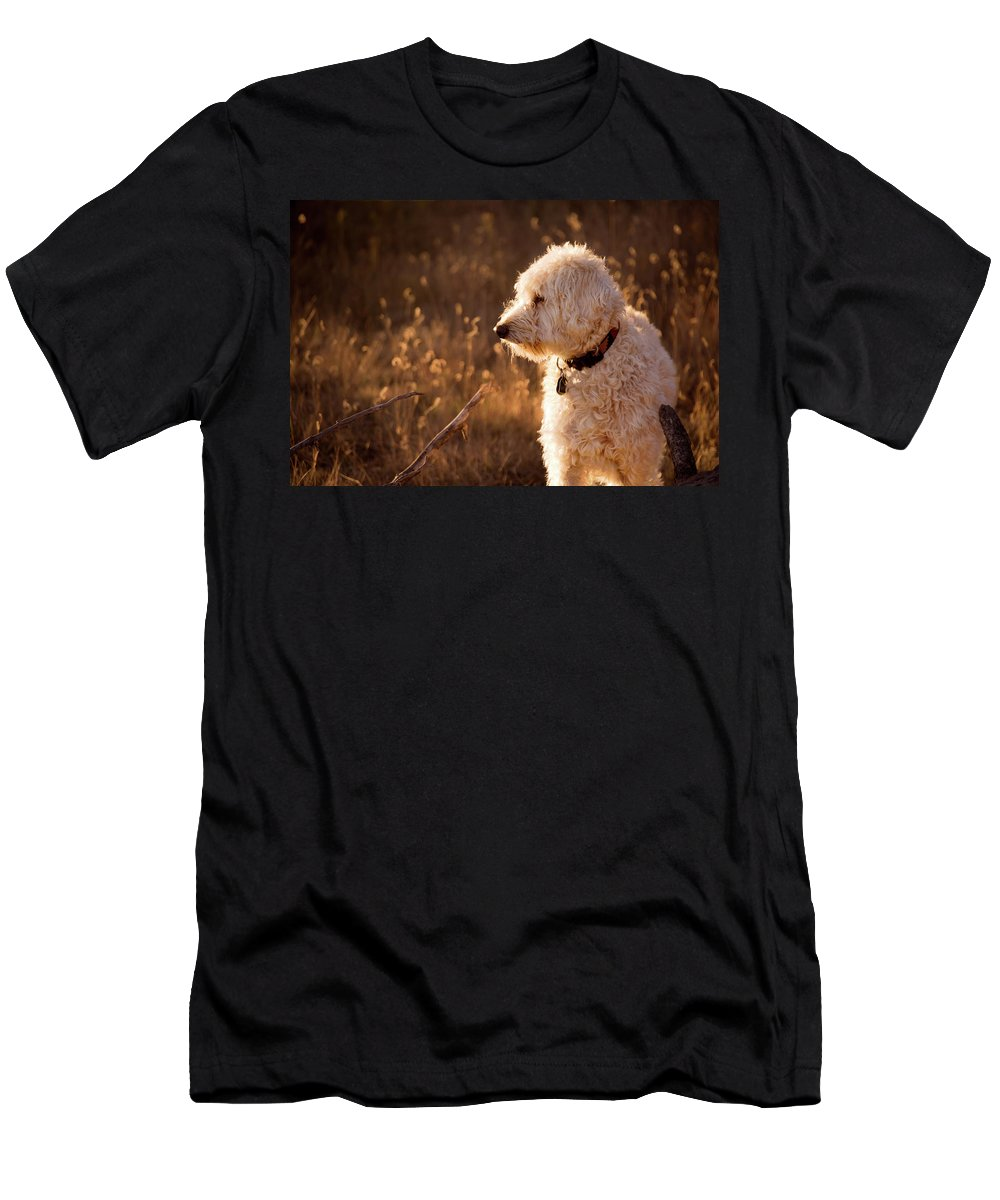 Teig Men's T-Shirt (Athletic Fit) featuring the photograph Standing In New Mexico's Golden Grass by Cary Leppert