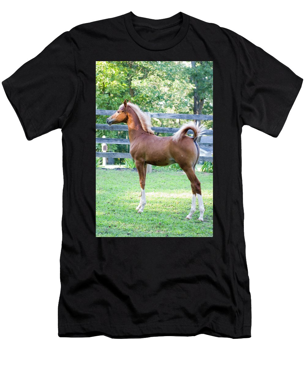 Horse Men's T-Shirt (Athletic Fit) featuring the photograph Statuesque by Michael Barry