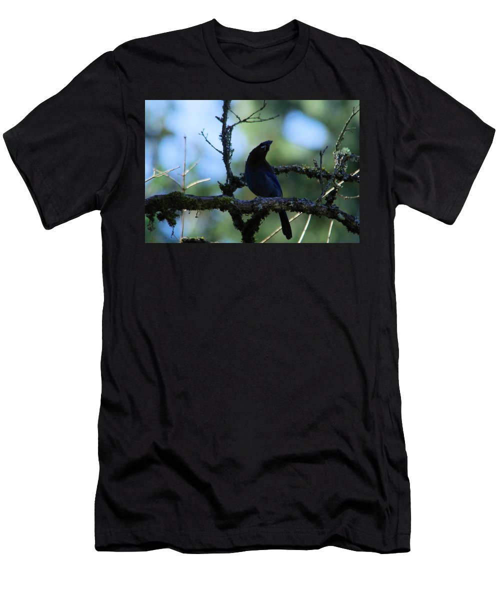 Blue Jay Men's T-Shirt (Athletic Fit) featuring the photograph Stellar Jay Tilts Its Head by Jeff Swan