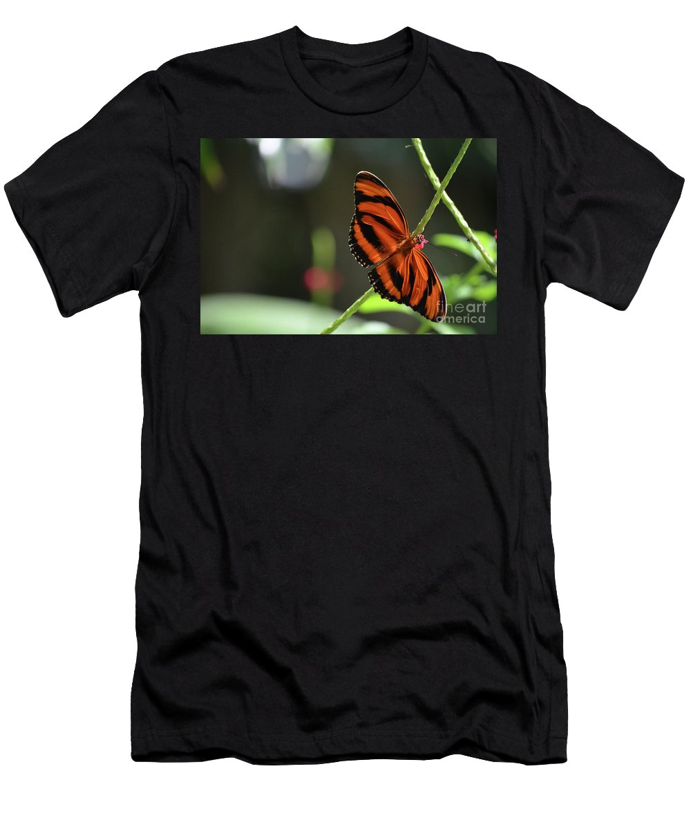 Butterfly Men's T-Shirt (Athletic Fit) featuring the photograph Stunning Orange And Black Oak Tiger Butterfly In Nature by DejaVu Designs