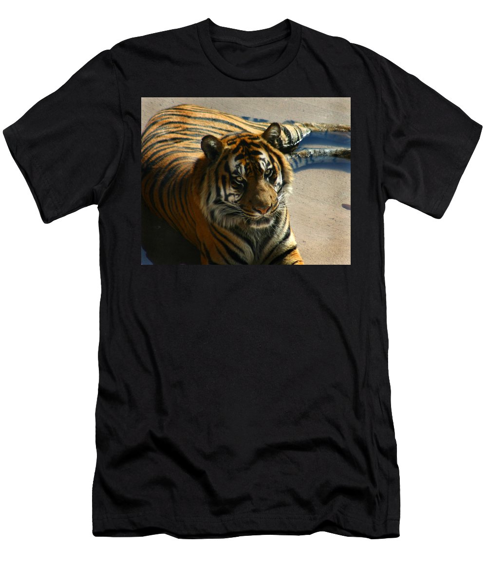 Tiger Men's T-Shirt (Athletic Fit) featuring the photograph Sumatran Tiger by Anthony Jones