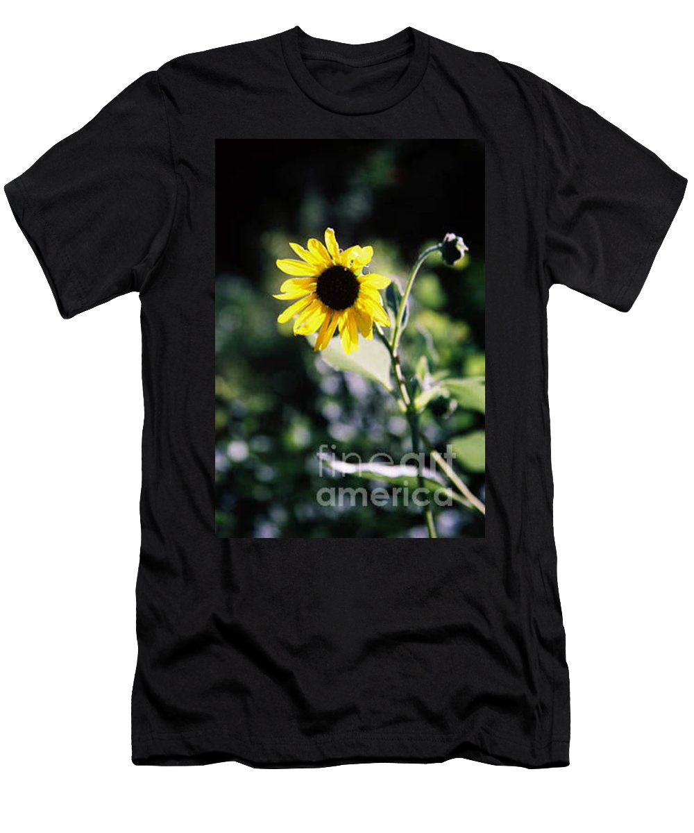 Sunflower Men's T-Shirt (Athletic Fit) featuring the photograph Summer Sunshine by Kathy McClure