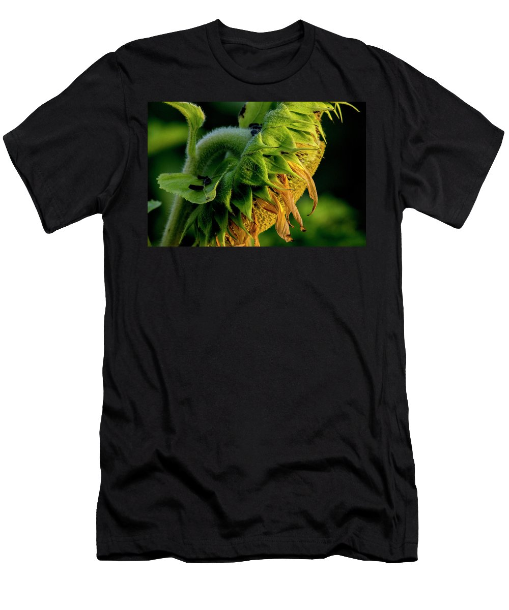 Sunflower Men's T-Shirt (Athletic Fit) featuring the photograph Sunflower 2017 14 by Buddy Scott