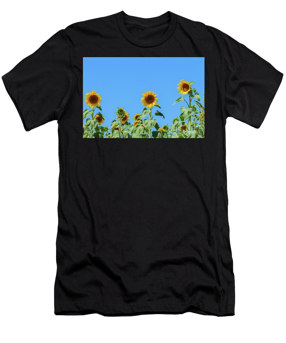 Sunflower Men's T-Shirt (Athletic Fit) featuring the photograph Sunflowers On Blue by Anastasy Yarmolovich