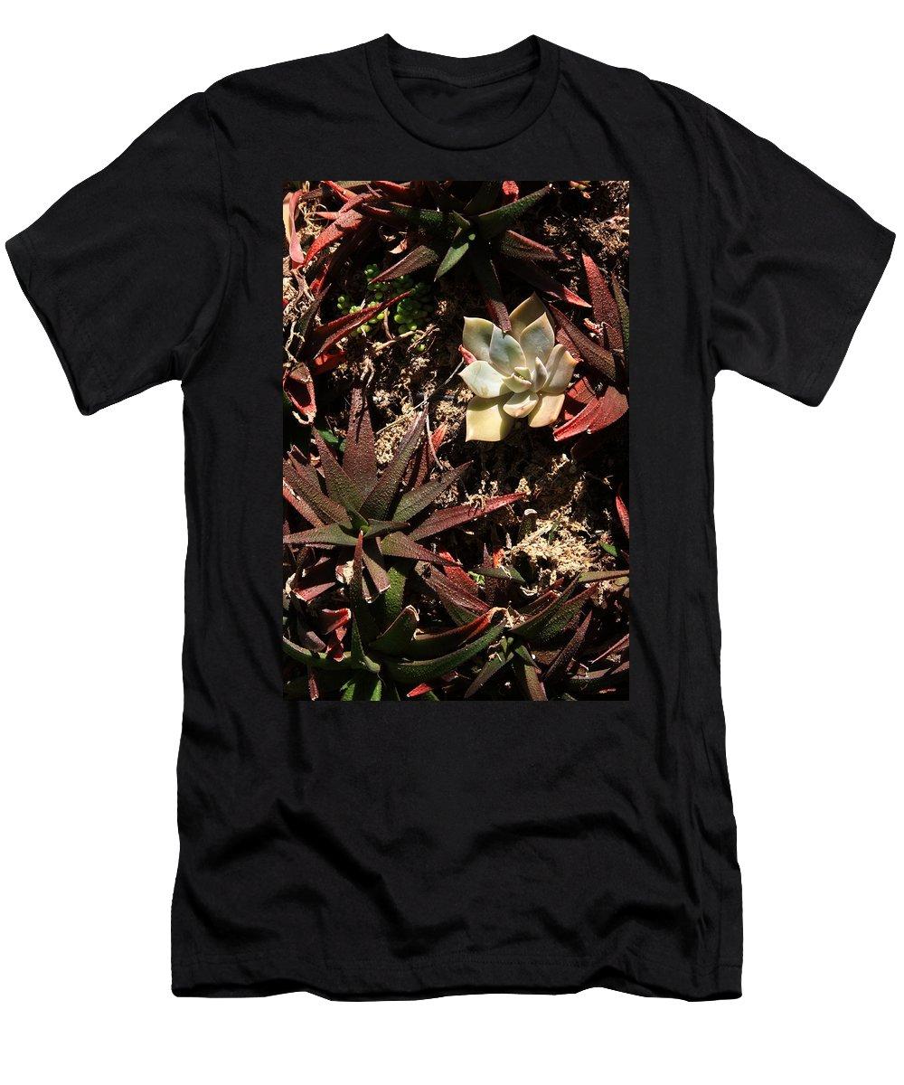 Succulents Men's T-Shirt (Athletic Fit) featuring the photograph Sunlight On Succulents by Lyle Hatch