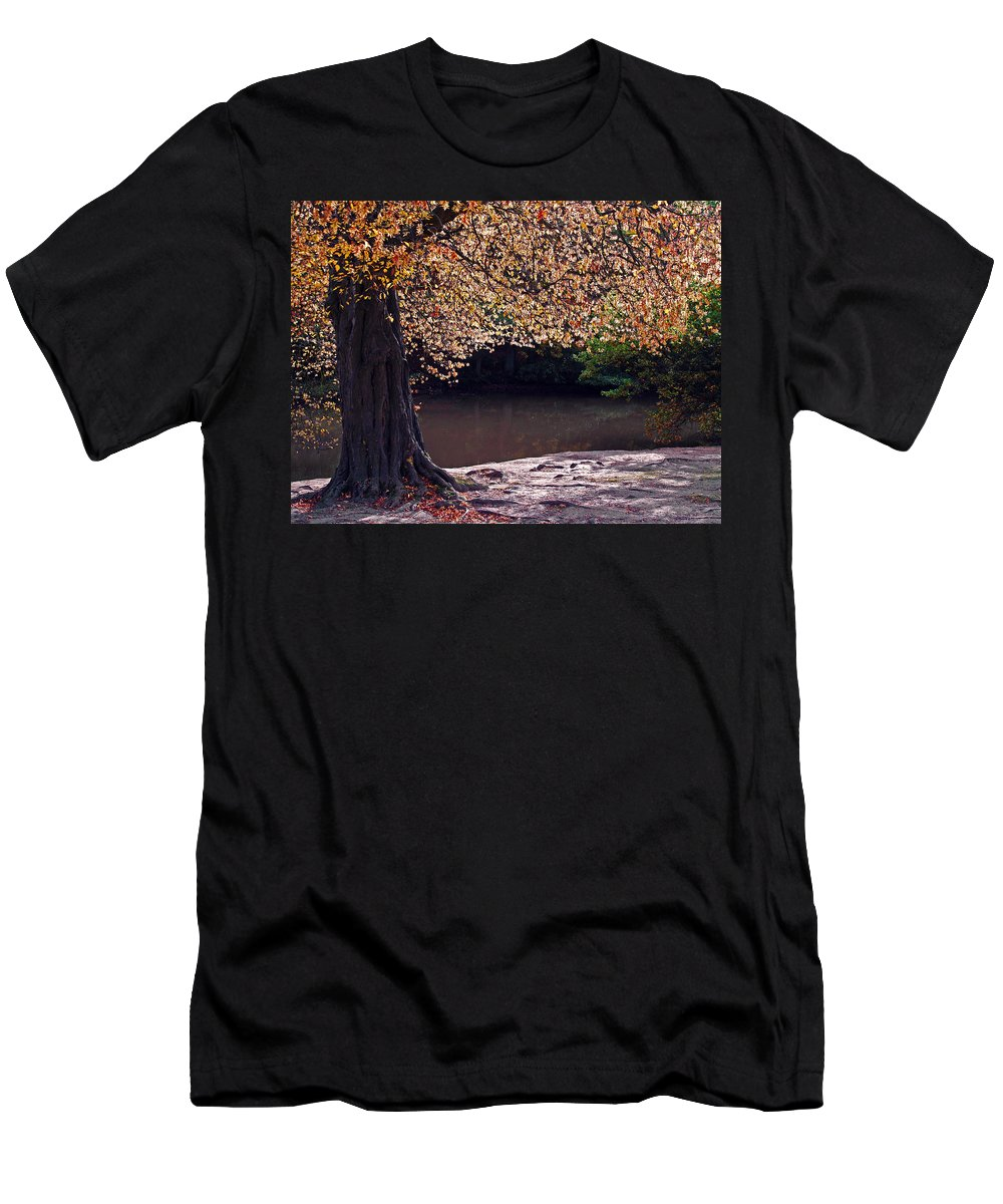Leaves Men's T-Shirt (Athletic Fit) featuring the photograph Sunlit Autumn Canopy by Bel Menpes