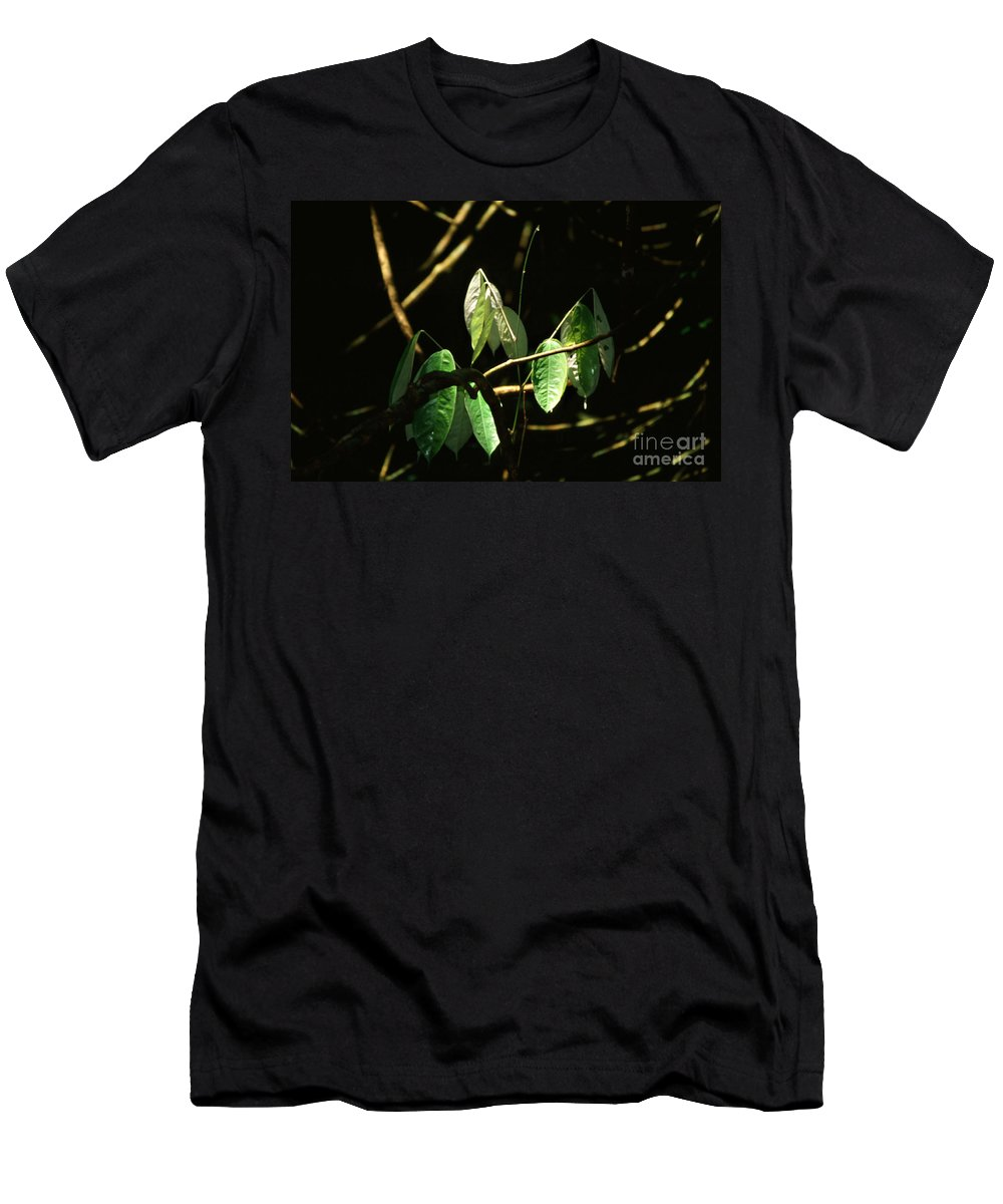 Leaves Men's T-Shirt (Athletic Fit) featuring the photograph Sunlit Leaves by Kathy McClure