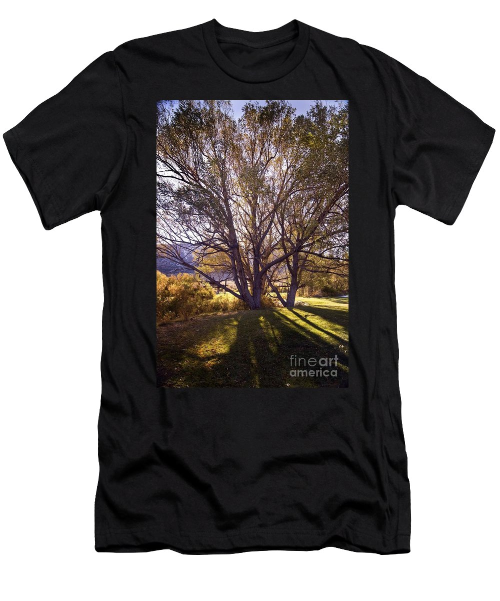Western Scenes Men's T-Shirt (Athletic Fit) featuring the photograph Sunny Mono Tree by Norman Andrus