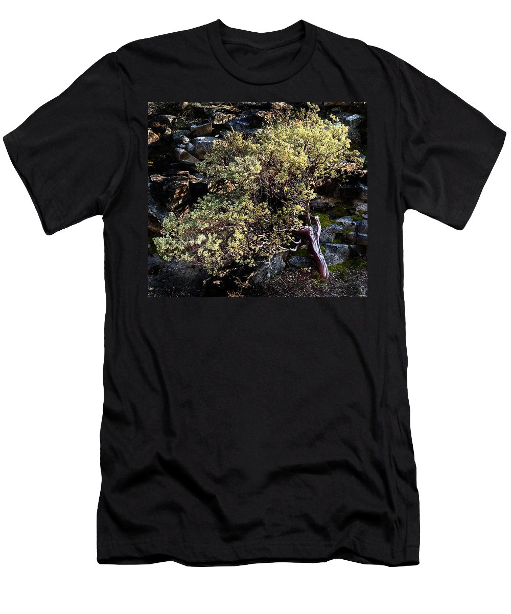 Trees Men's T-Shirt (Athletic Fit) featuring the photograph Sunny Tree by Norman Andrus