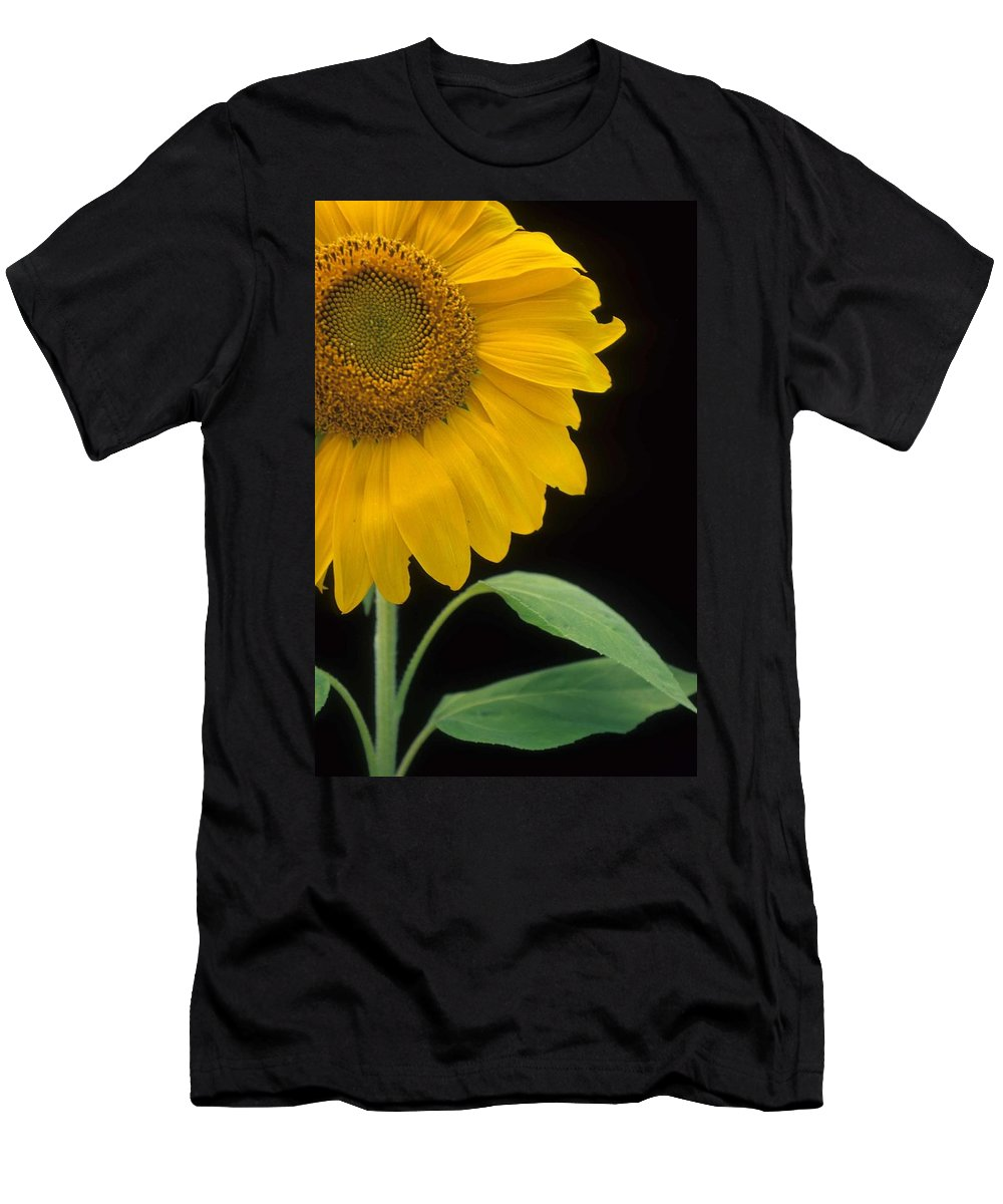 Sunflower Men's T-Shirt (Athletic Fit) featuring the photograph Sussex County Gem by Laurie Paci