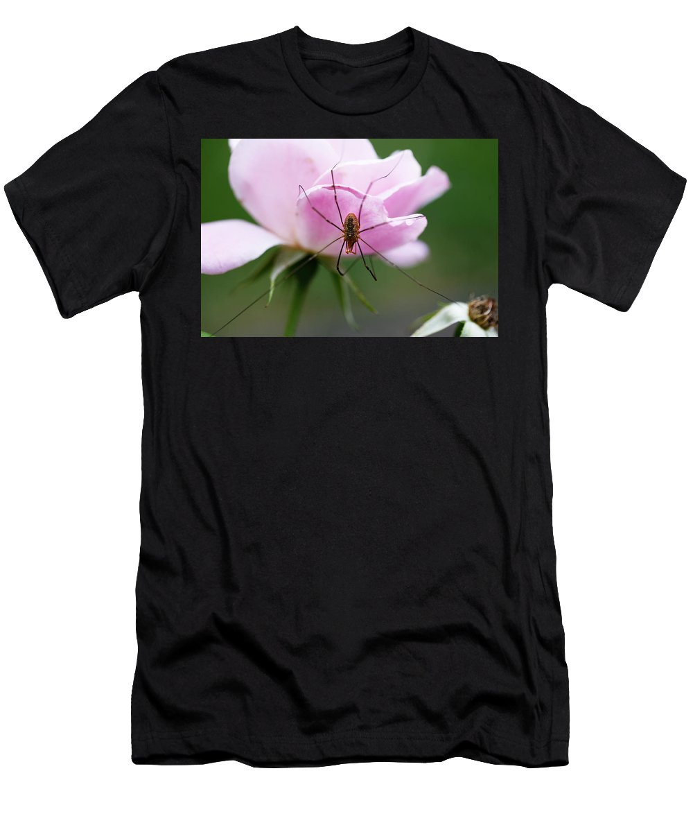 Rose Men's T-Shirt (Athletic Fit) featuring the photograph Taking A Stroll by Marilyn Hunt