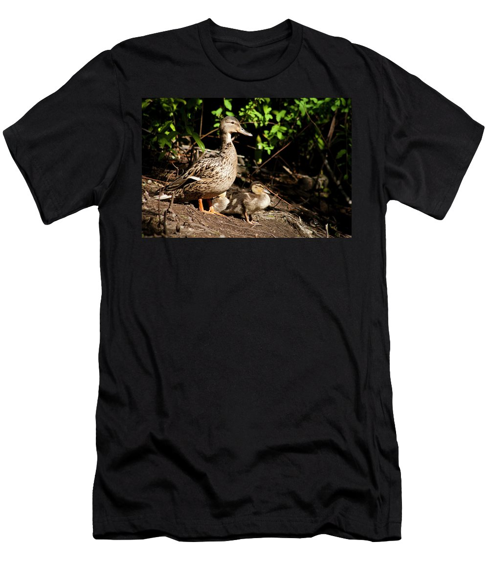 Duck Men's T-Shirt (Athletic Fit) featuring the photograph Taking Care Of Mom by Monte Arnold