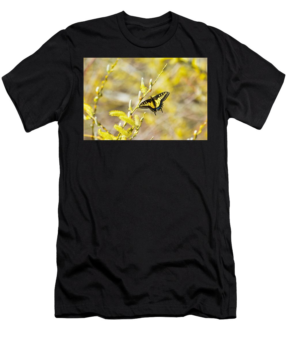 Anise Swallowtail Papilio Zelicaon Men's T-Shirt (Athletic Fit) featuring the photograph the Anise Swallowtail feeding in the trees by Royal Tyler