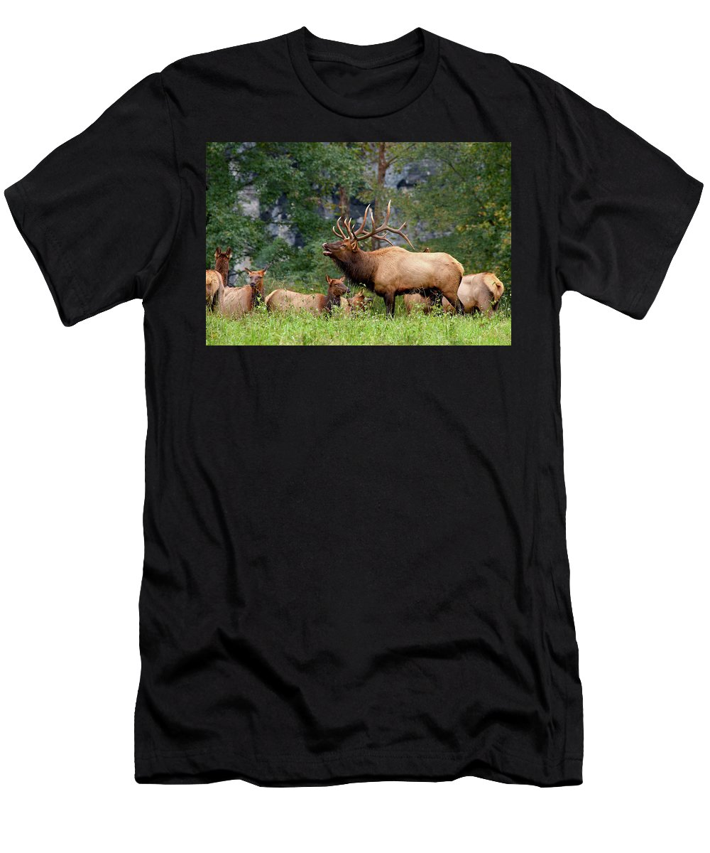 Boxley Men's T-Shirt (Athletic Fit) featuring the photograph The Bugling Bull Elk by Andy Favors