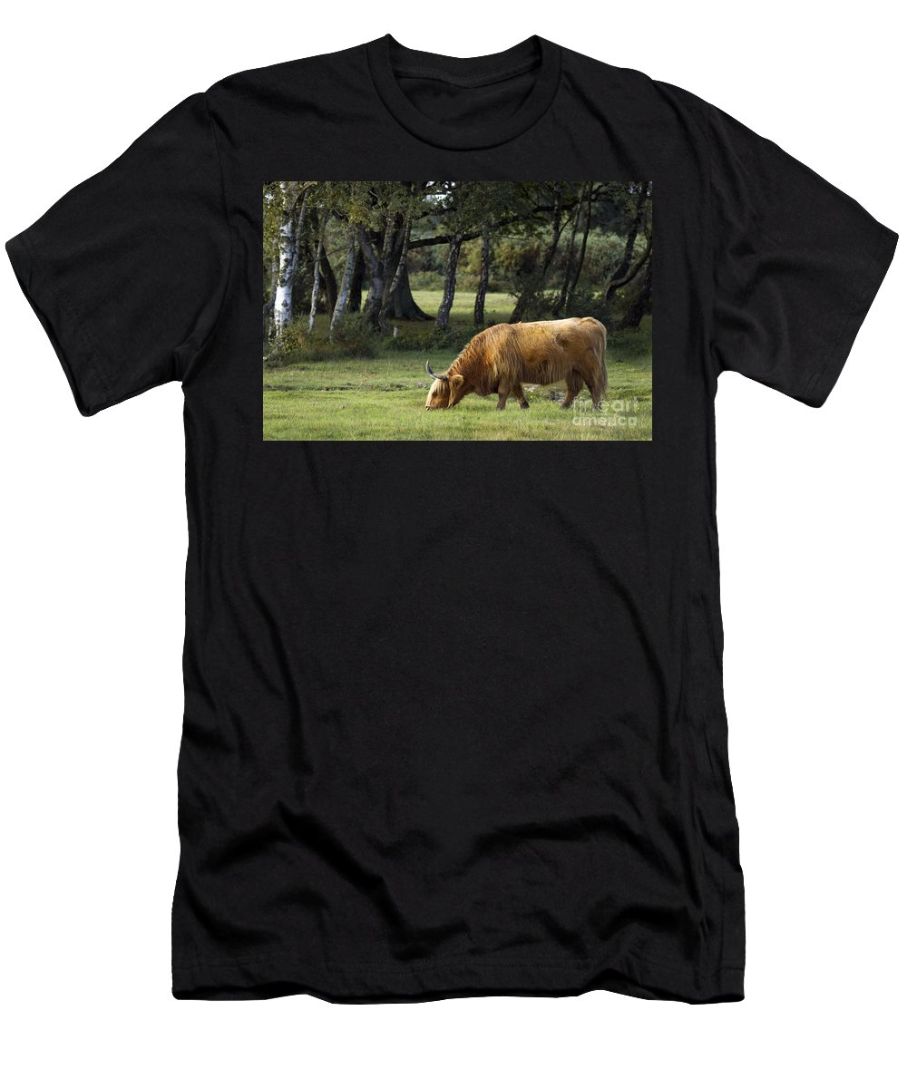 Heilan Coo Men's T-Shirt (Athletic Fit) featuring the photograph The Creature Of New Forest by Angel Ciesniarska