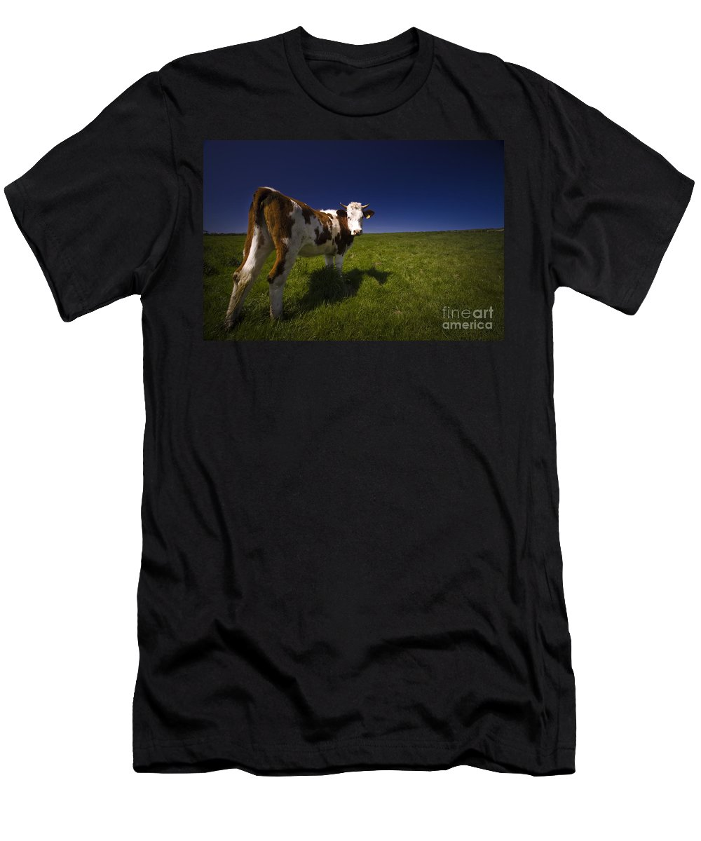 Cow Men's T-Shirt (Athletic Fit) featuring the photograph The Funny Cow by Angel Ciesniarska