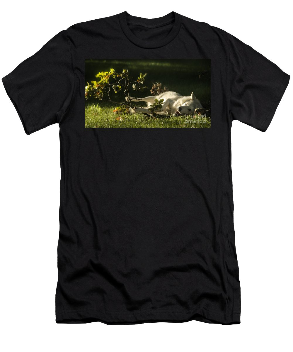 Wolf Men's T-Shirt (Athletic Fit) featuring the photograph The Happy Wolf by Angel Ciesniarska