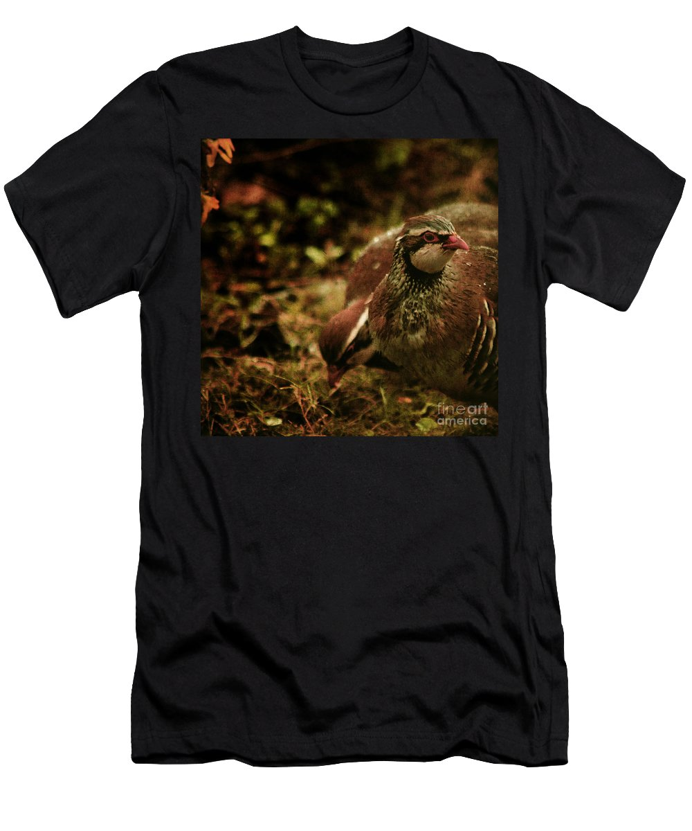 Partridge Men's T-Shirt (Athletic Fit) featuring the photograph The Redlegged Partridges by Angel Ciesniarska