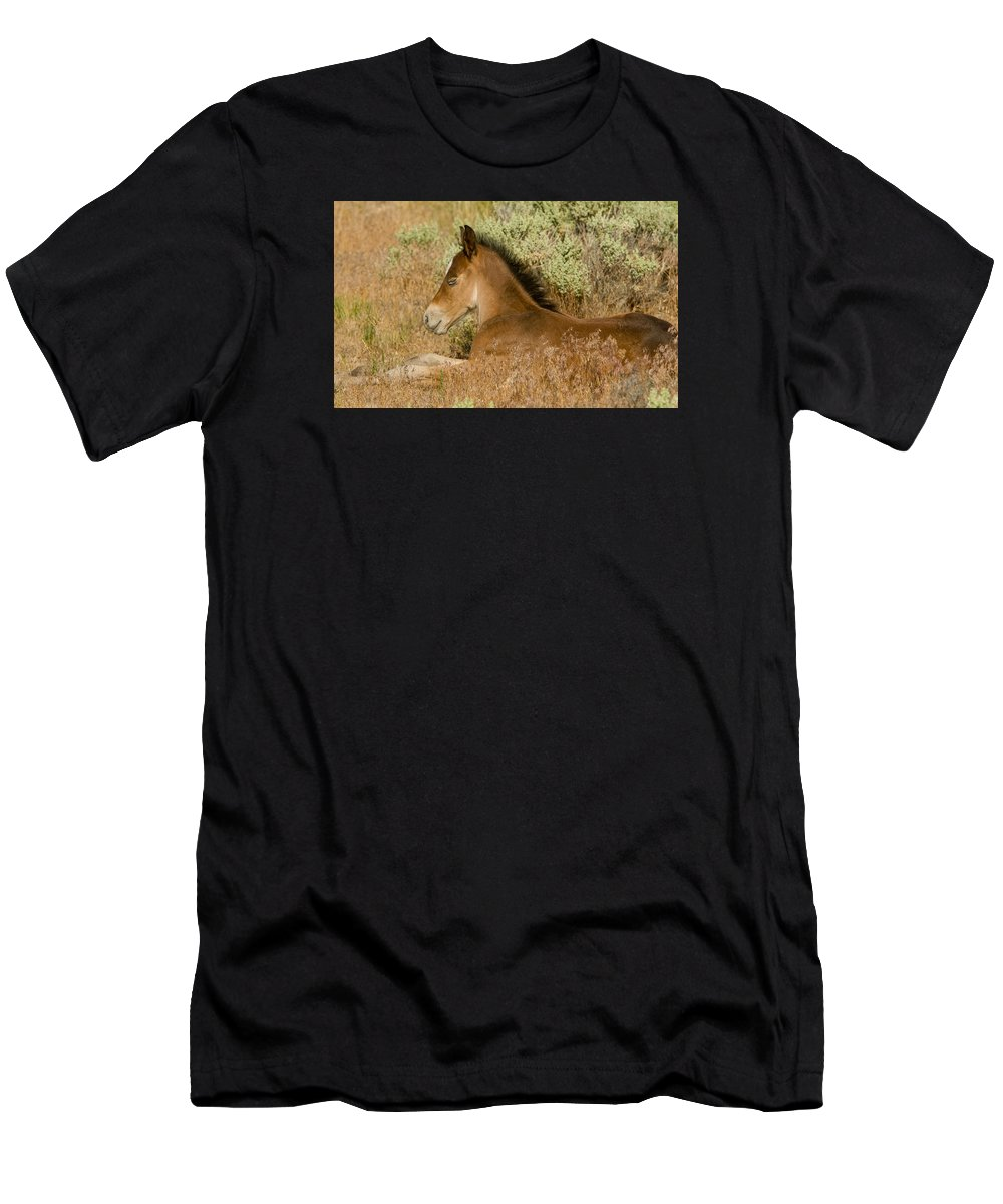 Wild Horse Men's T-Shirt (Athletic Fit) featuring the photograph The Resting Place by Kent Keller