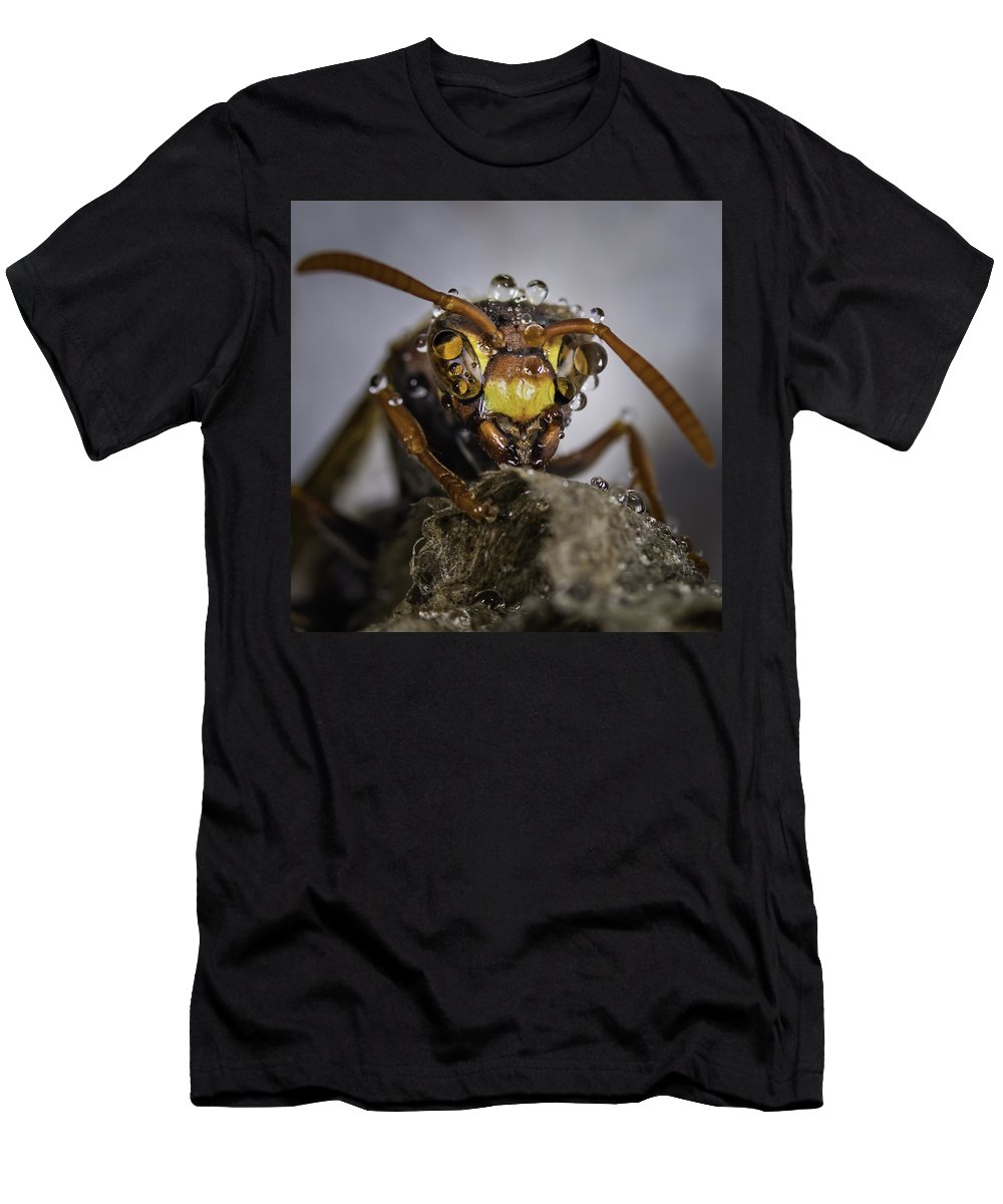 Macro Men's T-Shirt (Athletic Fit) featuring the photograph The Wasp by Chris Cousins