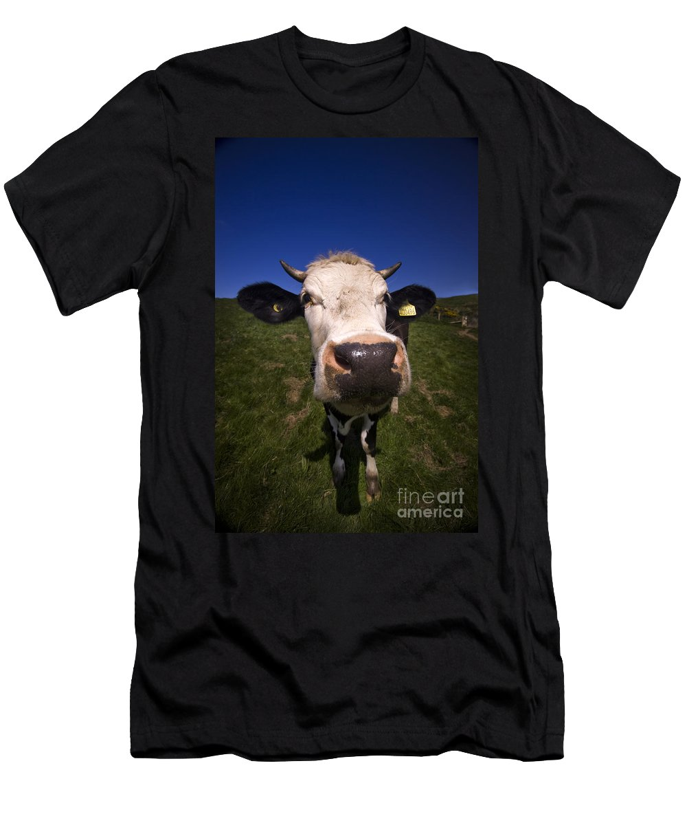 Cow Men's T-Shirt (Athletic Fit) featuring the photograph The Wideangled Cow by Angel Tarantella
