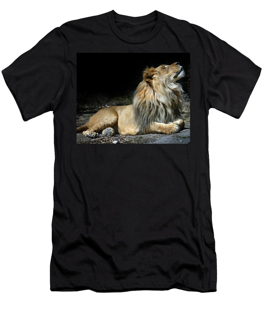Lion Men's T-Shirt (Athletic Fit) featuring the photograph This Is My Best Side by Anthony Jones