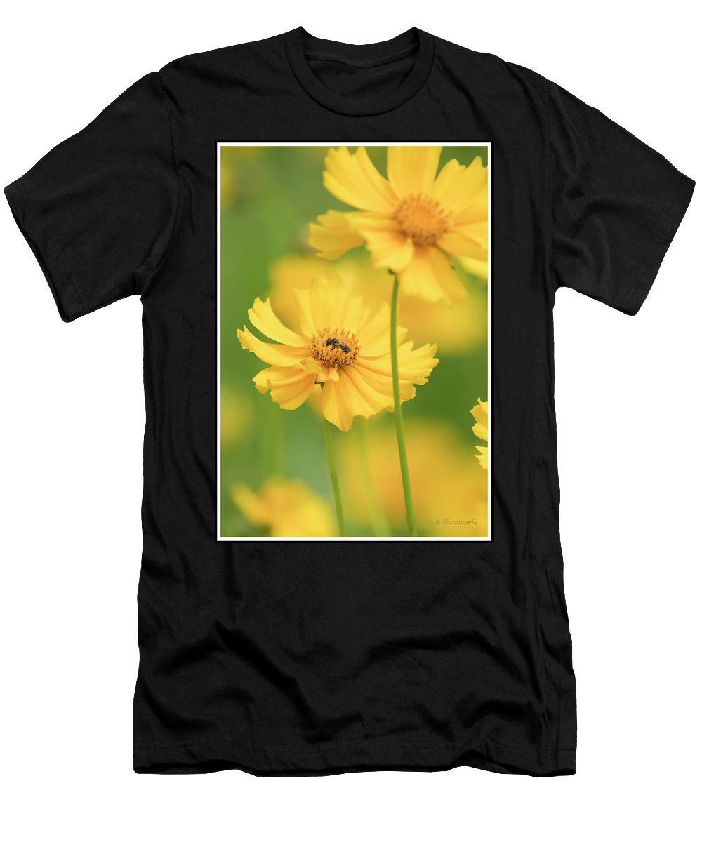 Threadleaf Coreopsis Men's T-Shirt (Athletic Fit) featuring the photograph Threadleaf Coreopsis, Tickseed by A Gurmankin