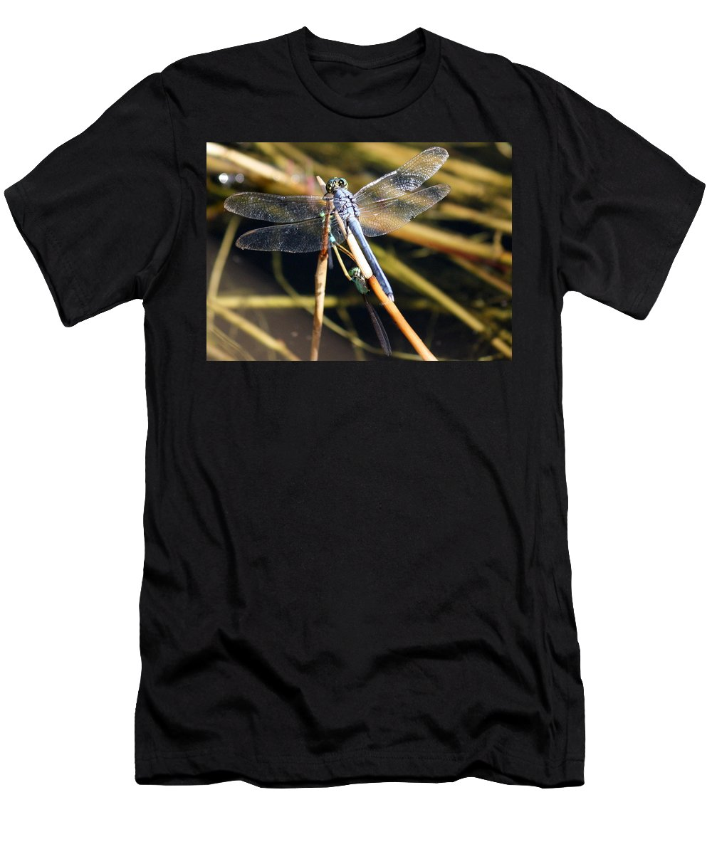 Dragonflies Men's T-Shirt (Athletic Fit) featuring the photograph Three Dragonflies On One Reed by Carol Groenen