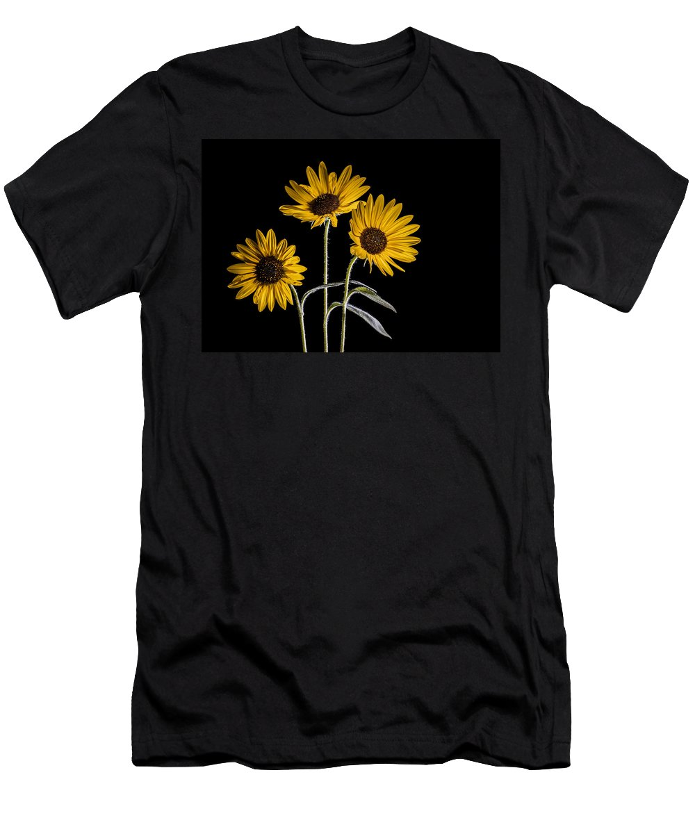 Sunflowers Men's T-Shirt (Athletic Fit) featuring the photograph Three Sunflowers Light Painted On Black by Vishwanath Bhat