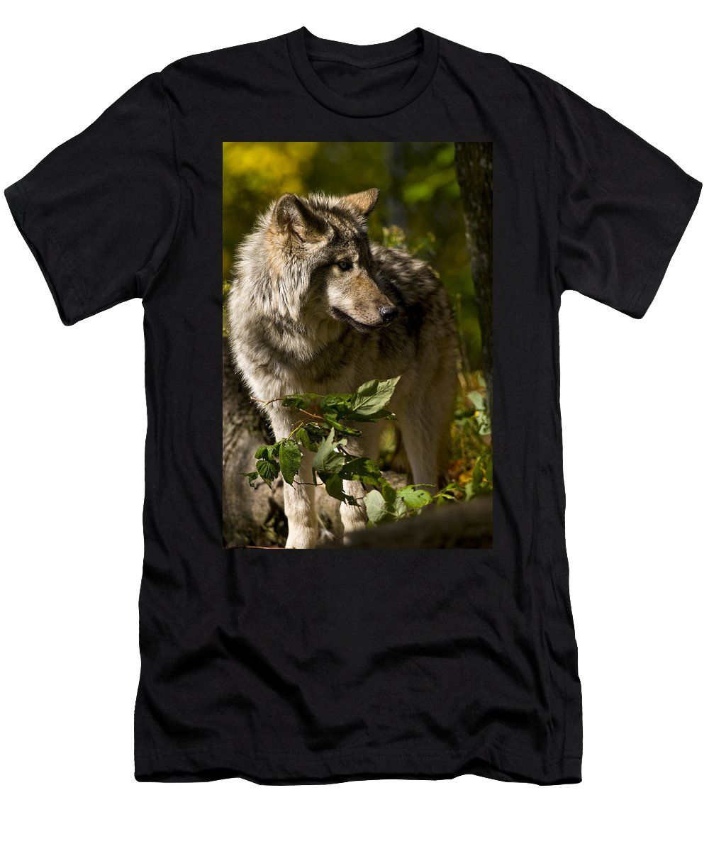 Michael Cummings Men's T-Shirt (Athletic Fit) featuring the photograph Timber Wolf by Michael Cummings