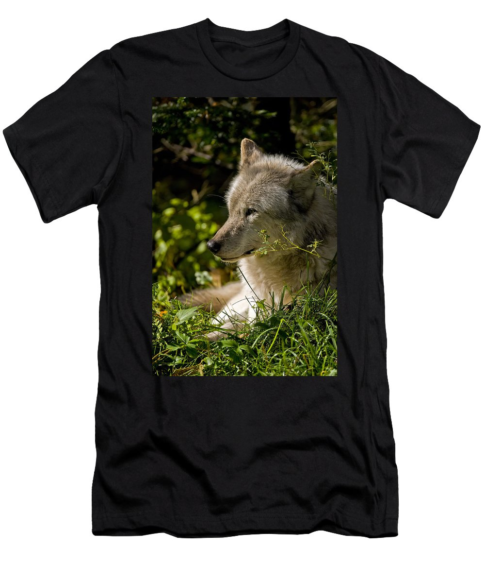Michael Cummings Men's T-Shirt (Athletic Fit) featuring the photograph Timber Wolf Portrait by Michael Cummings