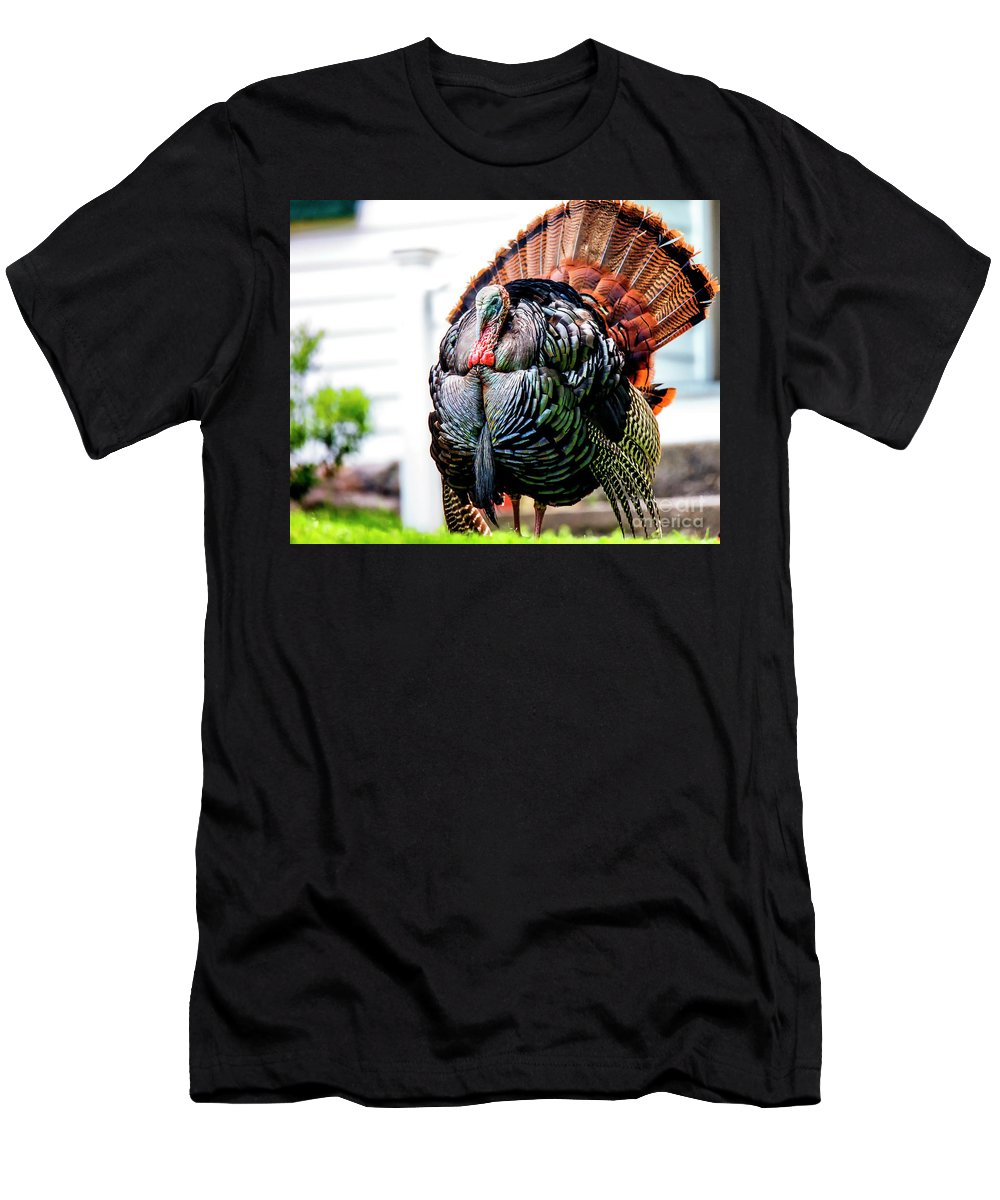 Tom Men's T-Shirt (Athletic Fit) featuring the photograph Male Turkey by Grant Dupill