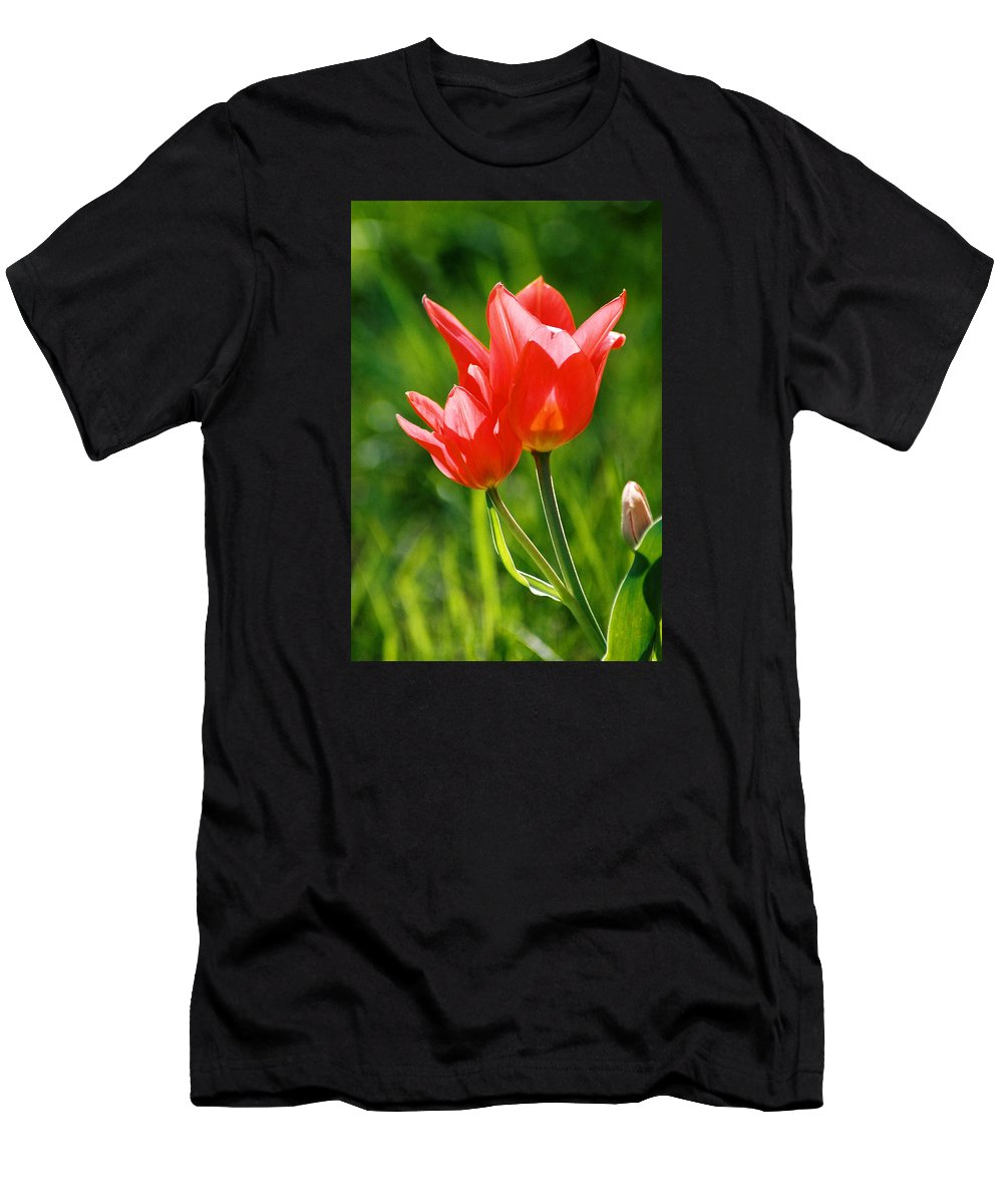 Flowers Men's T-Shirt (Athletic Fit) featuring the photograph Toronto Tulip by Steve Karol