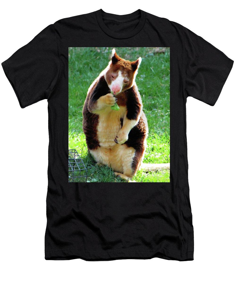 Tree Kangaroo Men's T-Shirt (Athletic Fit) featuring the photograph Tree Kangaroo by September Stone