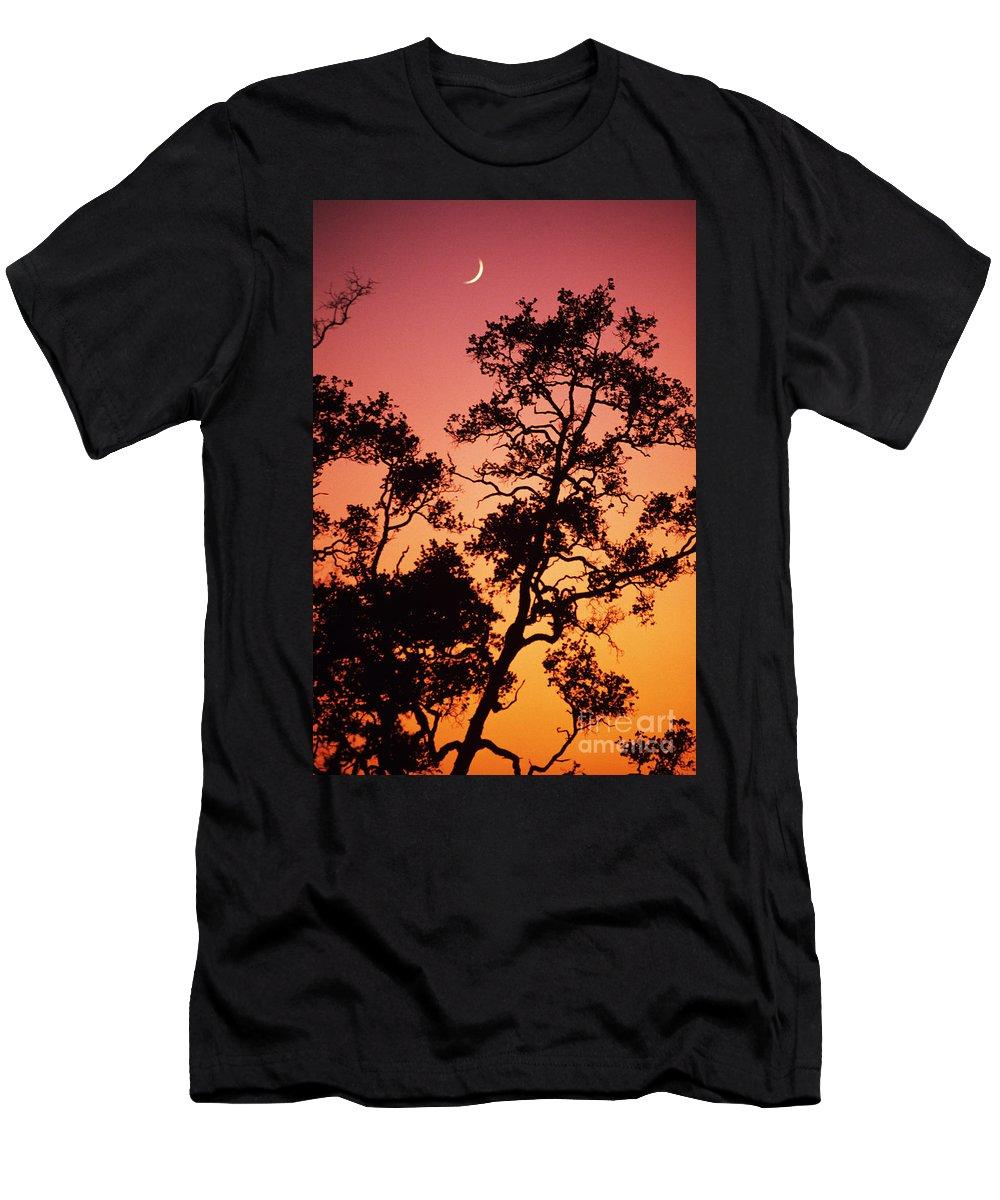 Allan Seiden Men's T-Shirt (Athletic Fit) featuring the photograph Tree Silhouette by Allan Seiden - Printscapes