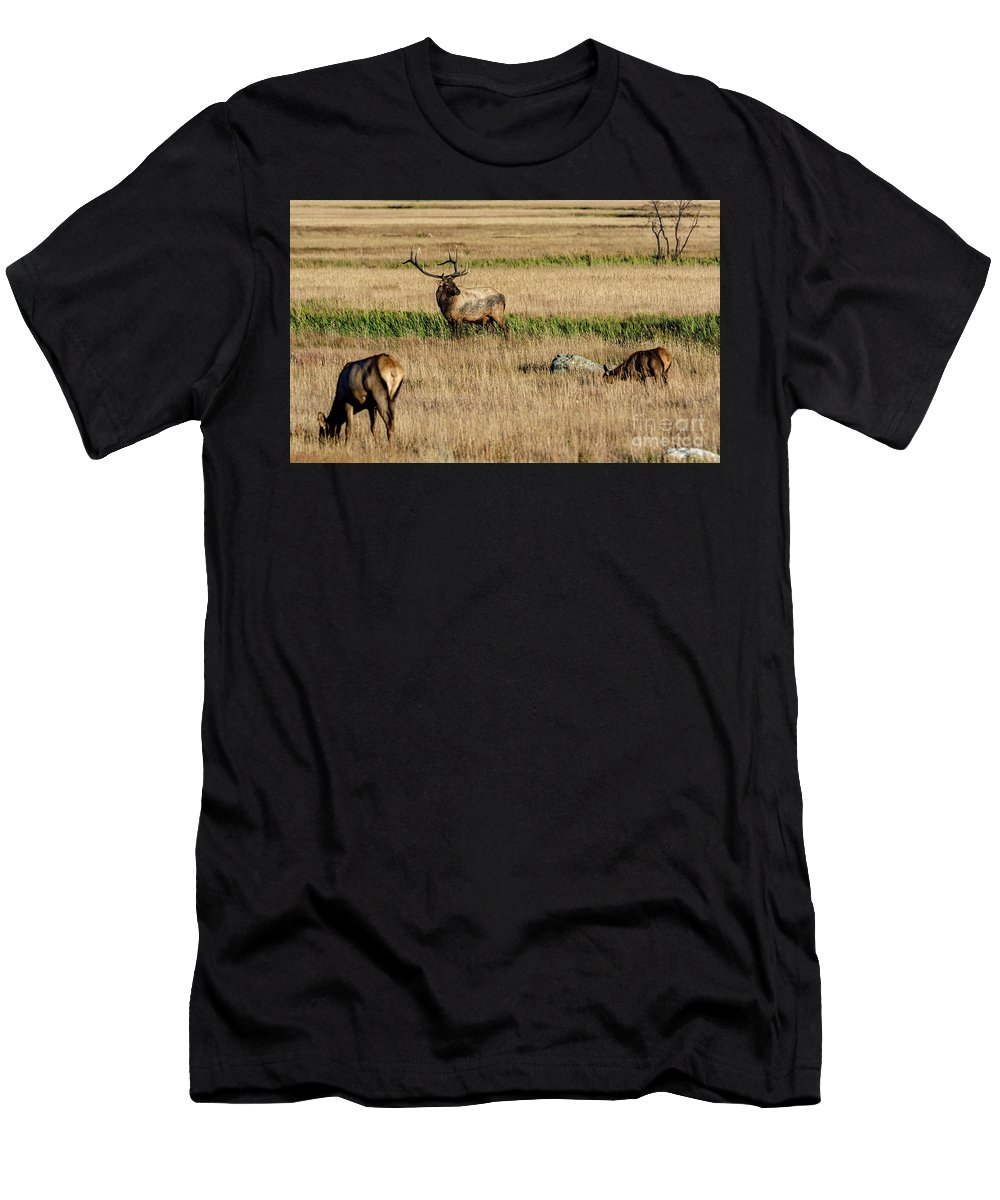 Trifecta Men's T-Shirt (Athletic Fit) featuring the photograph Trifecta by Bitter Buffalo Photography