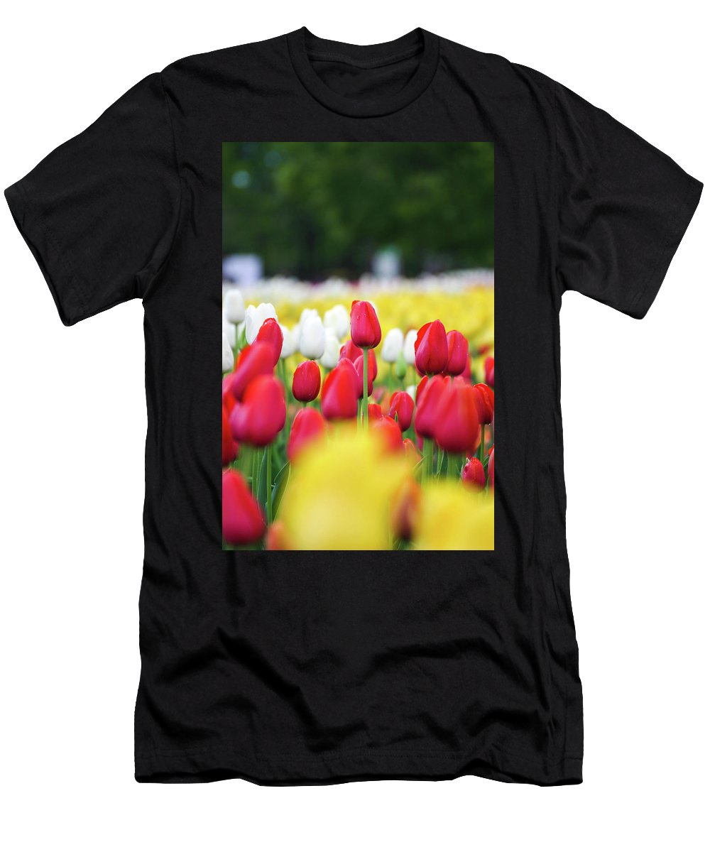 Framed Prints Men's T-Shirt (Athletic Fit) featuring the photograph Tulips By Jared Windmuller - Tulip - Red - by Jared Windmuller