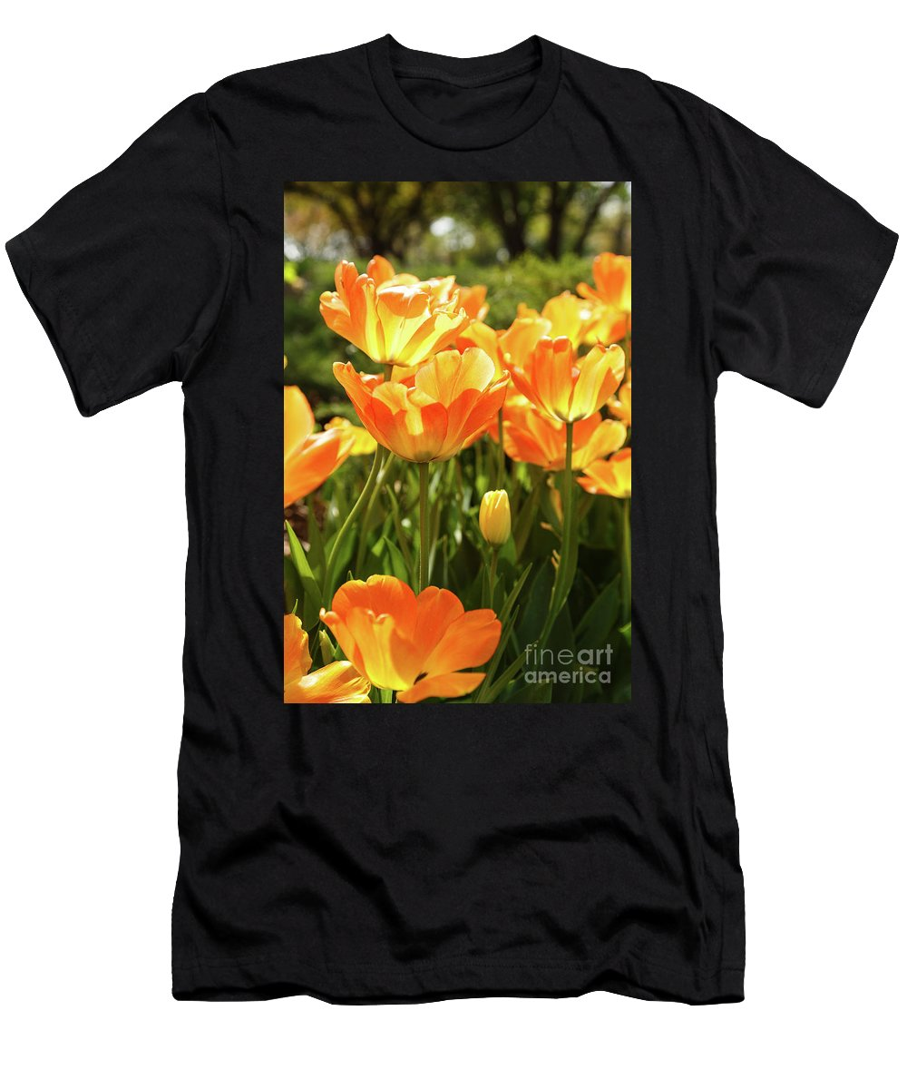Tulips Men's T-Shirt (Athletic Fit) featuring the photograph Tulips In The Sunlight by Terri Morris