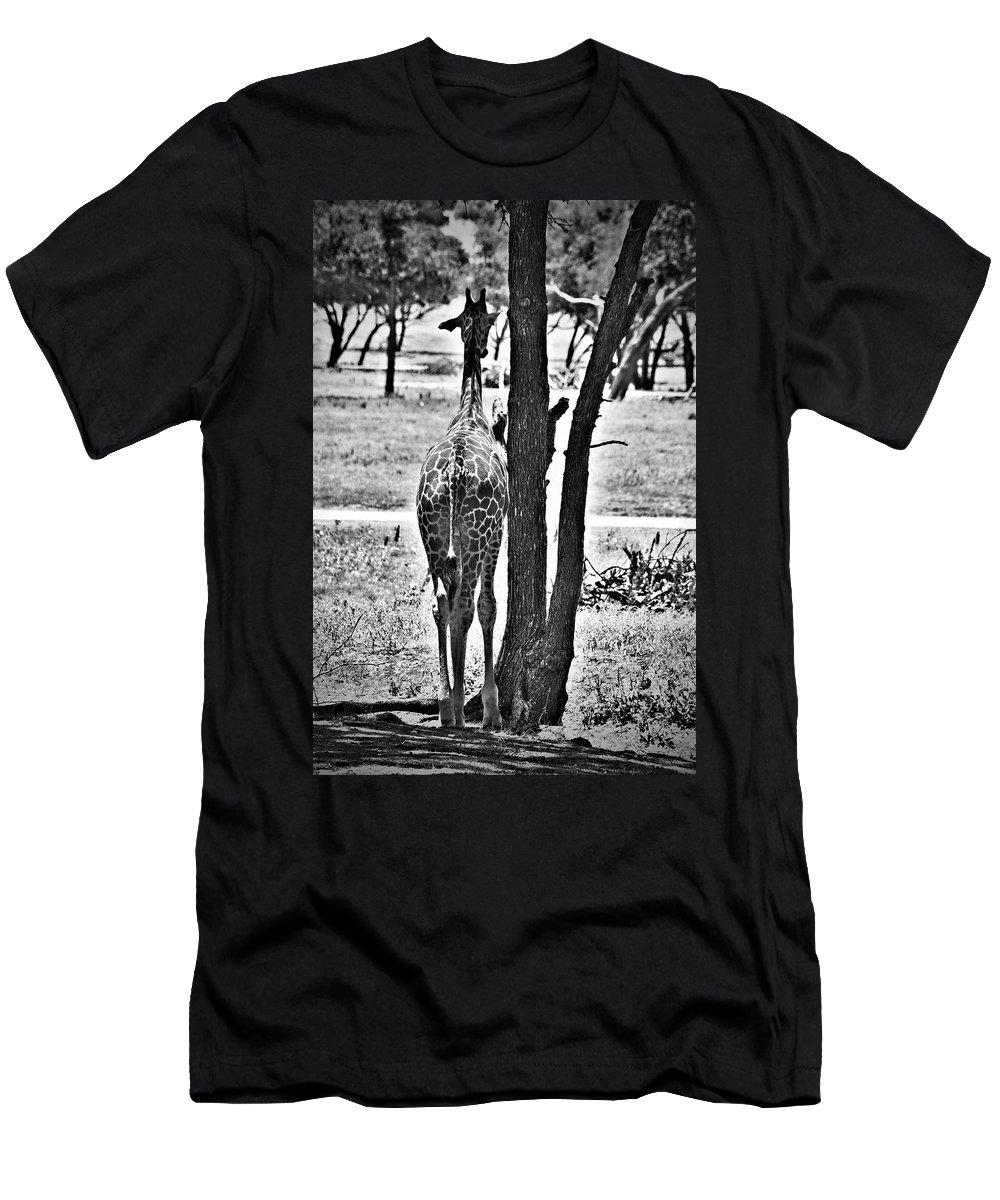 Giraffe Men's T-Shirt (Athletic Fit) featuring the photograph Twiga by Douglas Barnard