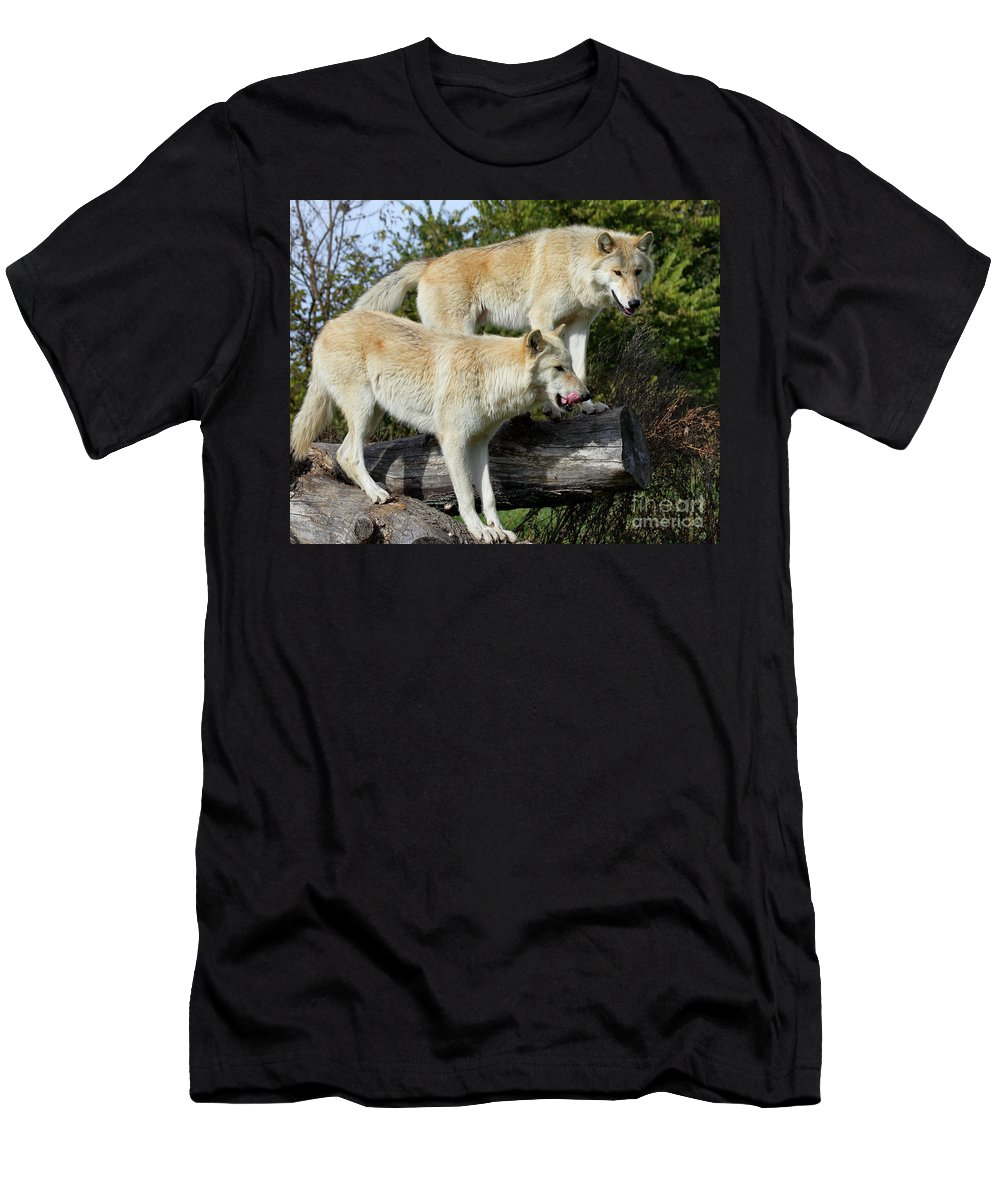 Animal Autumn Canine Carnivore Furry Grass Gray Grey Hunter Hunting Lupus Mammal Natural Nature Outdoors Predator Men's T-Shirt (Athletic Fit) featuring the photograph Twin Blond Wolves by John Wijsman