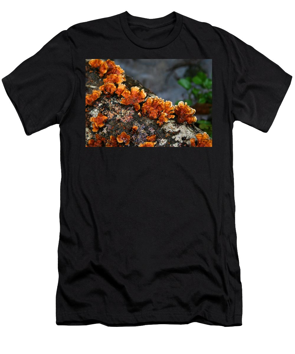 Bright Orange Nature Wet Forest Fungus Tree Wood Closeup Macro Men's T-Shirt (Athletic Fit) featuring the photograph Unexpected Brightness by Andrei Shliakhau