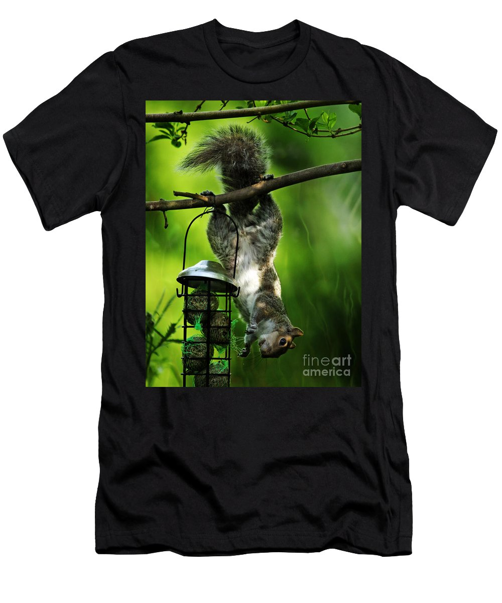 Squirrel Men's T-Shirt (Athletic Fit) featuring the photograph Upside Down by Angel Ciesniarska