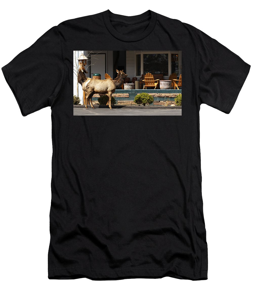 Elk Men's T-Shirt (Athletic Fit) featuring the photograph Urban Elk by Marilyn Hunt
