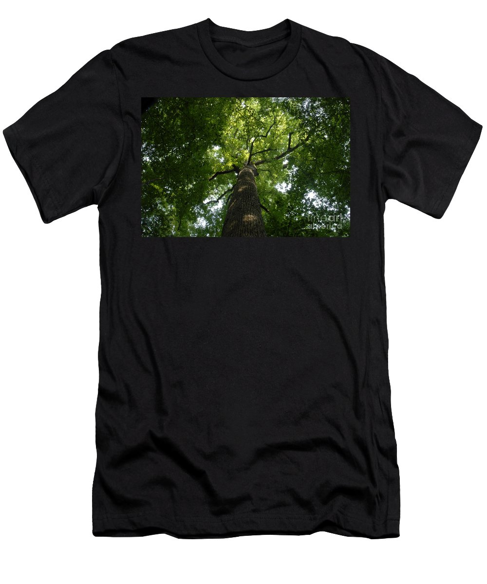 Joyce Kilmer Memorial Forest Men's T-Shirt (Athletic Fit) featuring the photograph Virgin Canopy by David Lee Thompson